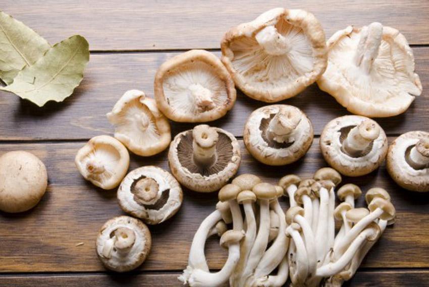cogumelos_dieta_vegana_vegetariana_nayumi